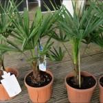 Über Ebay gekaufte Pflanzen Reklamieren mittels Rückgabeanfrage