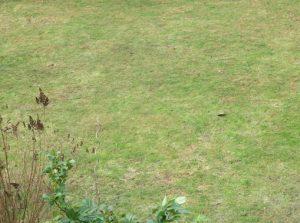 Rasen im März