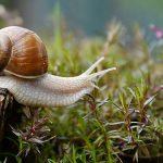 Ideen und Tipps für schöne Garten Fotos
