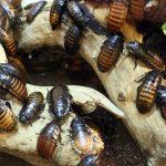 Schädlingsbekämpfung – Wann sollte man einen Kammerjäger beauftragen?